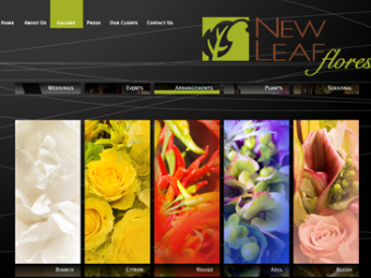 New Leaf Flores